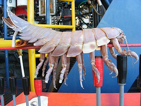 Чудища подводного мира (14 фото)