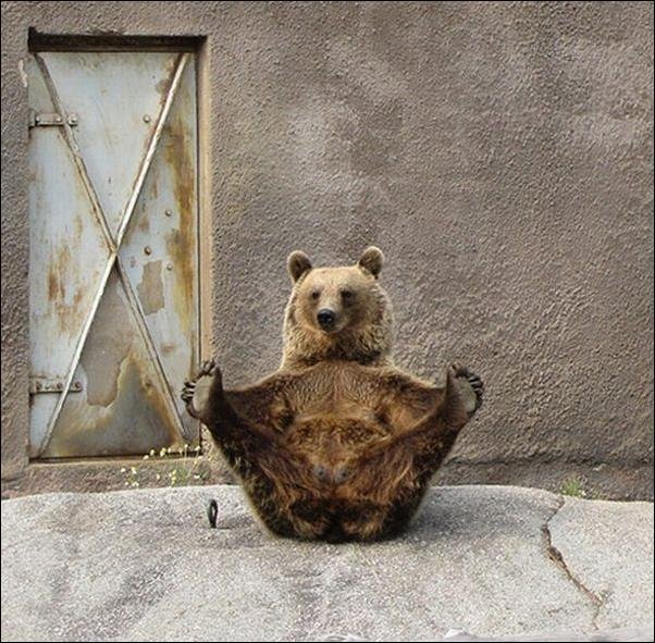 Медвежья зарядка (7 фото)