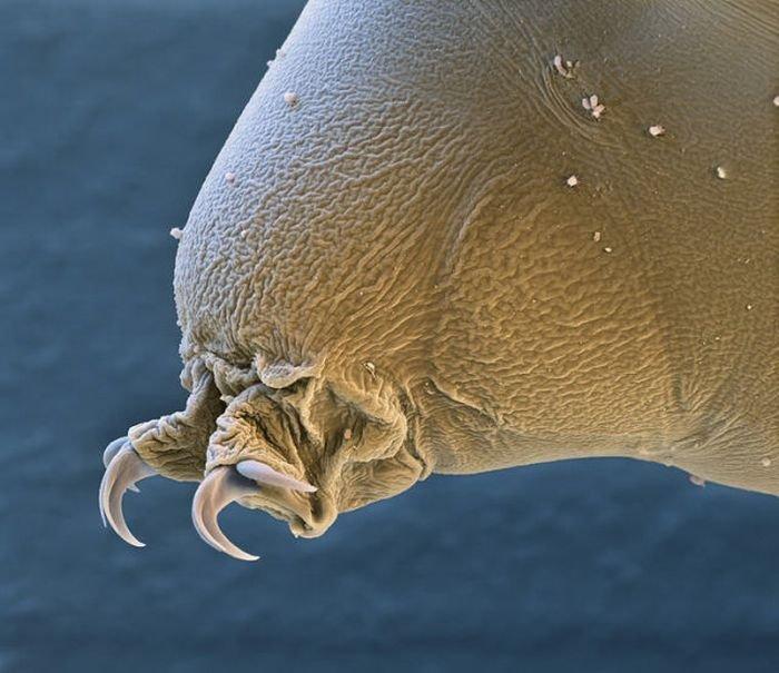 Самые живучие существа на планете (12 фото + текст)