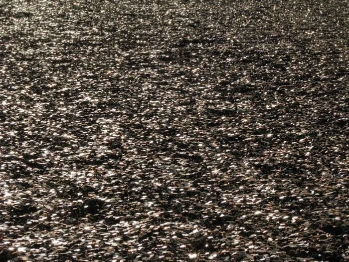 Миллион долларов одноцентовыми монетами (23 фото)