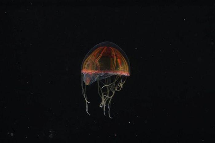 Монстры подводного мира (32 фото)