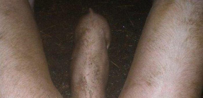 Что вы видите на этом снимке? (2 фото)