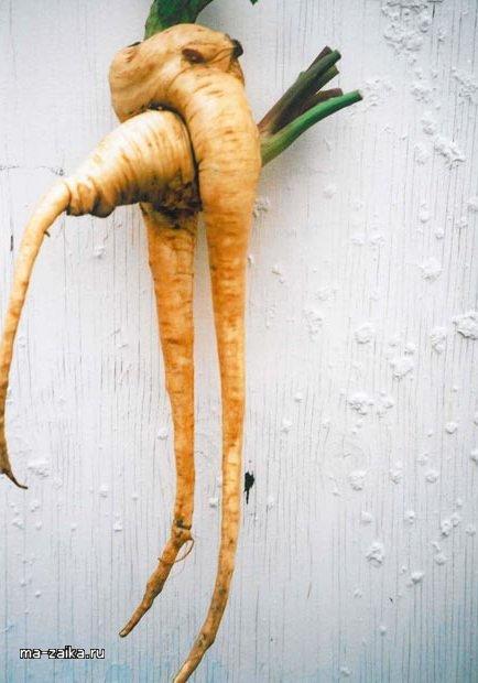 Необычный урожай (28 фото)