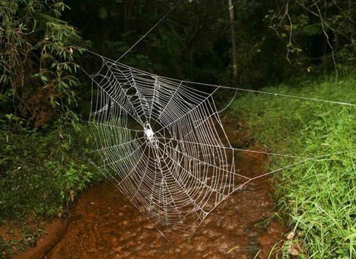 Гигантская паутина (6 фото)
