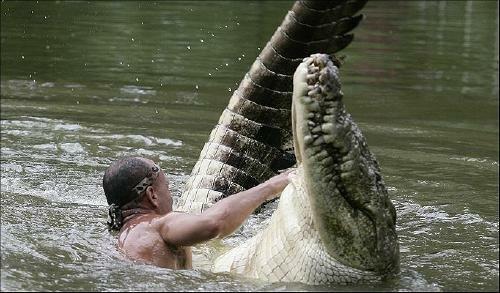 Дружба с крокодилом (4 фото)