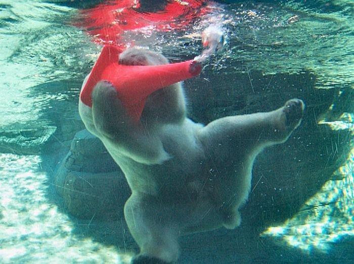 Белый медведь и конус (6 фото)