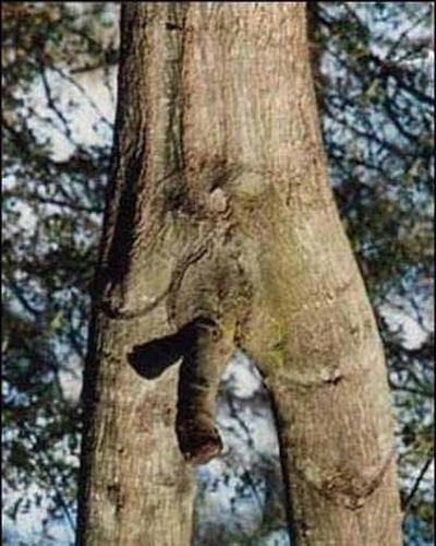 Порнография среди деревьев (12 фото)