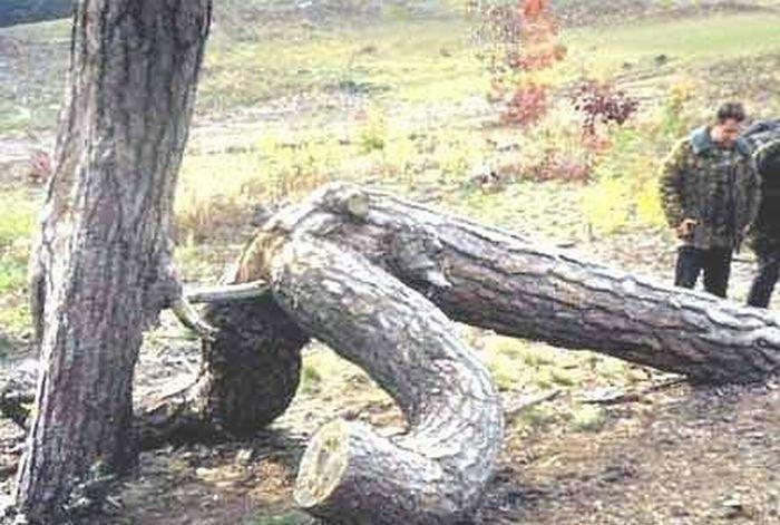 Смотреть порно групповуха в лесу