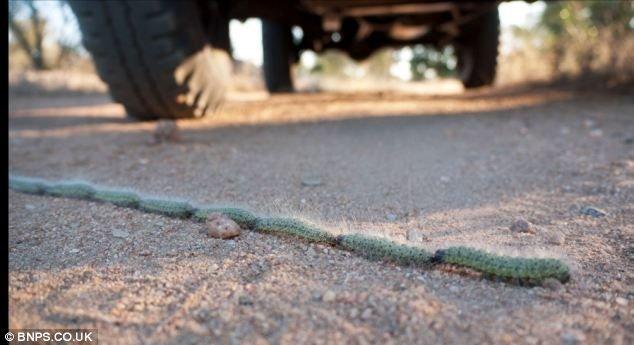 Пятиметровый канат (3 фото)
