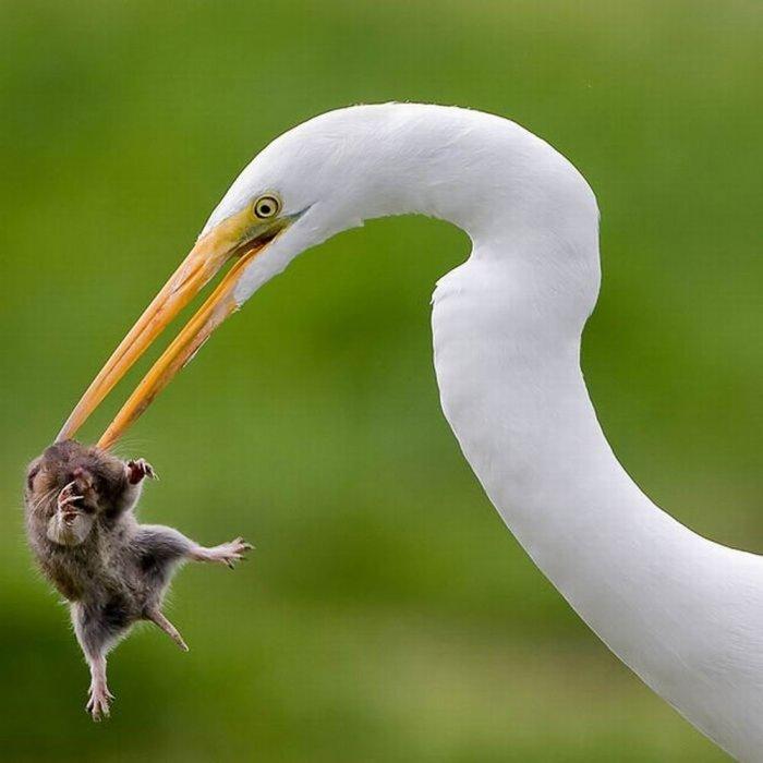 Разборки животных (20 фото)