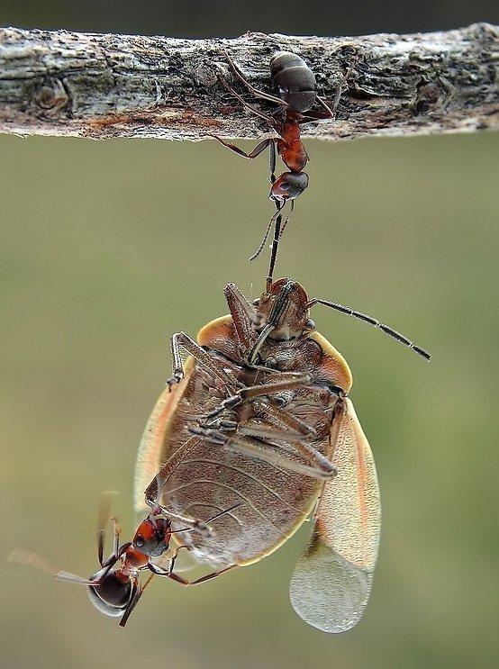 Imagenes de Hormigas HD + 10 cosas que no sabias de ellas