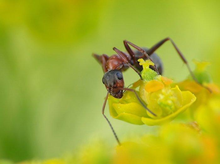 Hormigas trabajando | 20 Fotos en HD