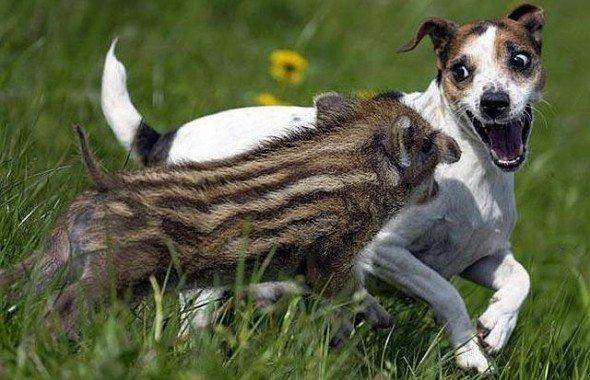 Дружба животных (20 фото)