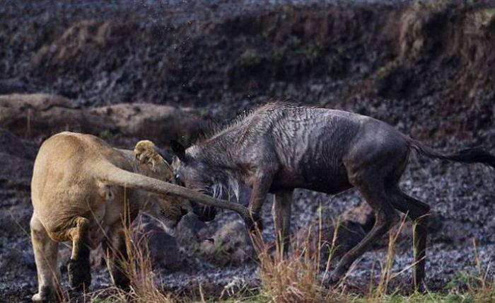 Охотник и жертва (5 фото)