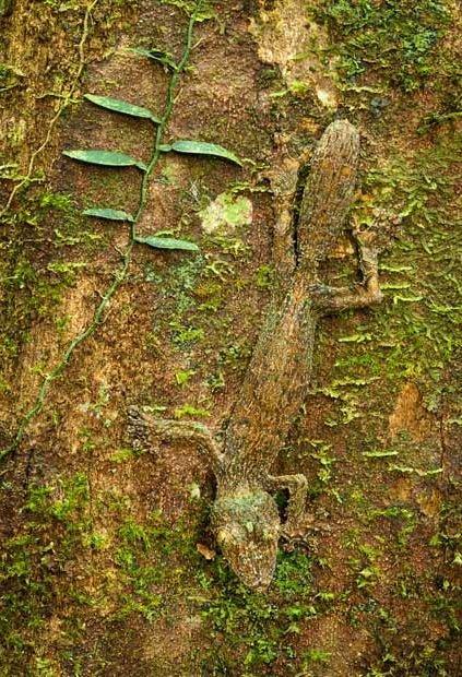 Природный камуфляж (14 фото)