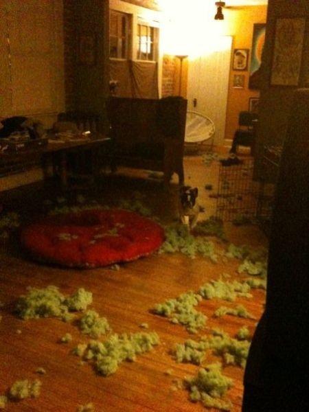 Послушный пес (4 фото)