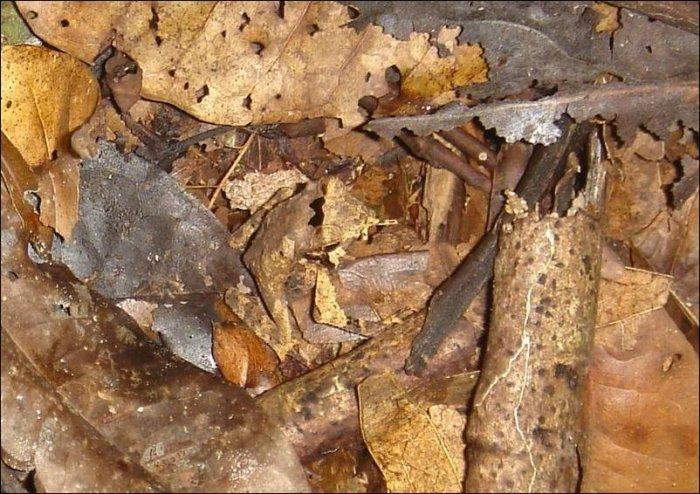 Найдите лягушку (4 фото)