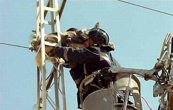 Спасение собаки с ЛЭП (6 фото)