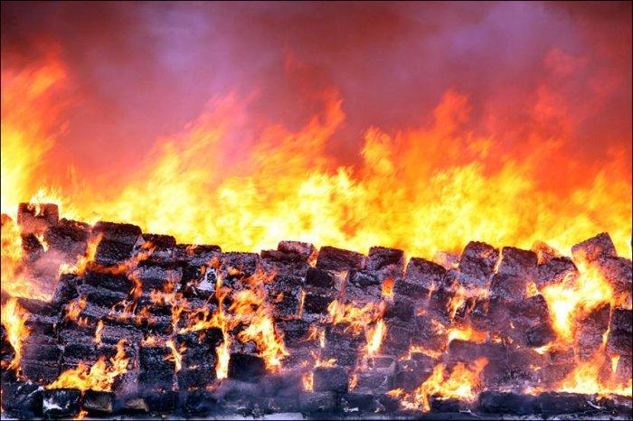 В Мексике сожгли 134 тонны конфискованной марихуаны (14 фото)