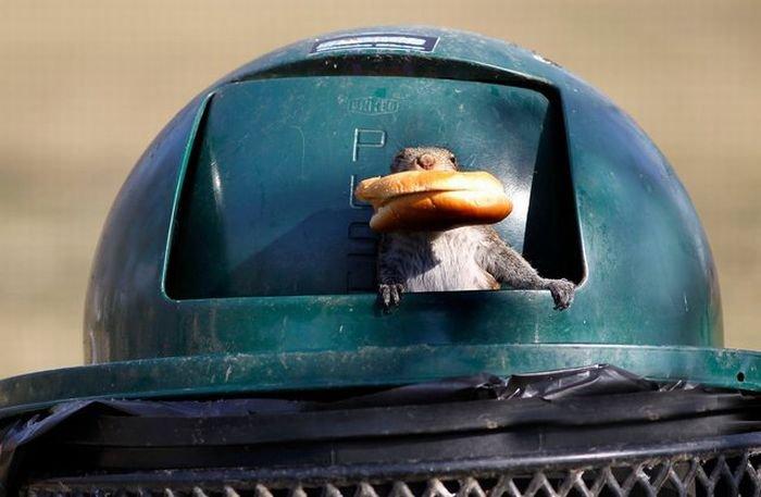 Белка обедает (7 фото)