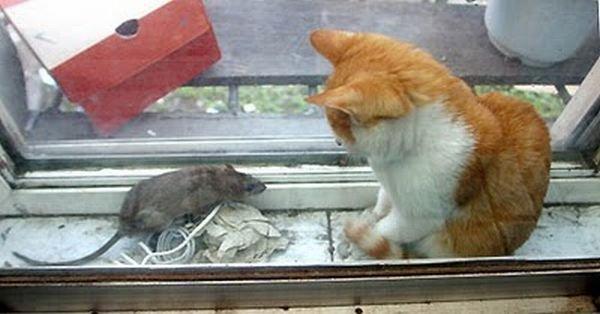 Кот и мышь (6 фото)