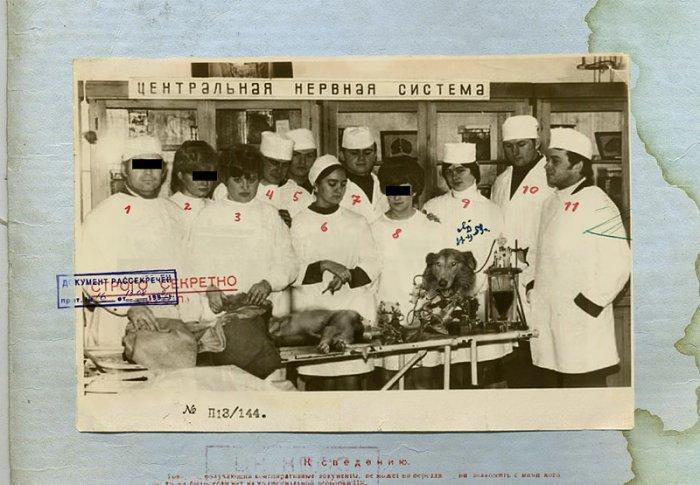 Биоробот из СССР (8 фото)