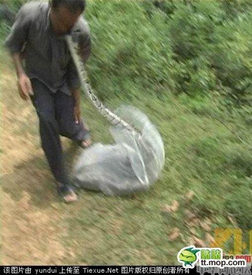 Поймал змею... (7 фото)