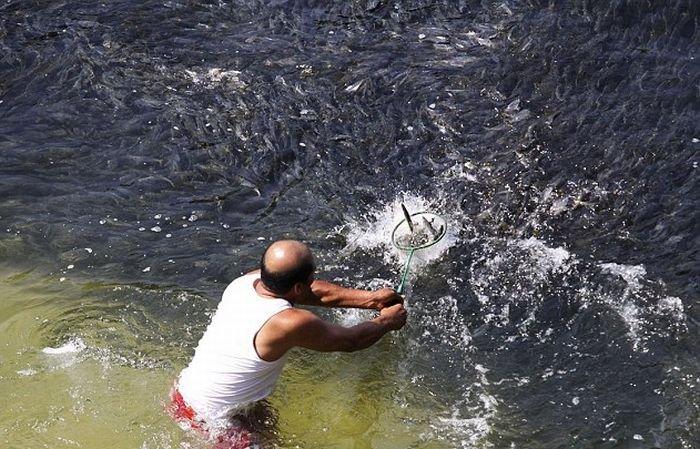 Скопления рыбы у берегов Мексики (6 фото)