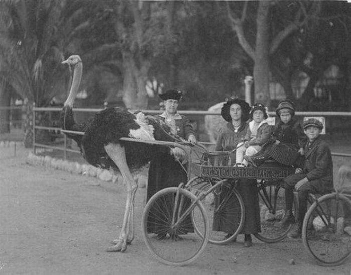 Забавные фотографии из прошлого (49 фото)