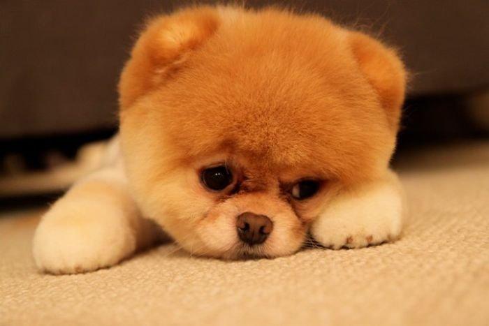 Самый популярный пес Фэйсбука (50 фото)