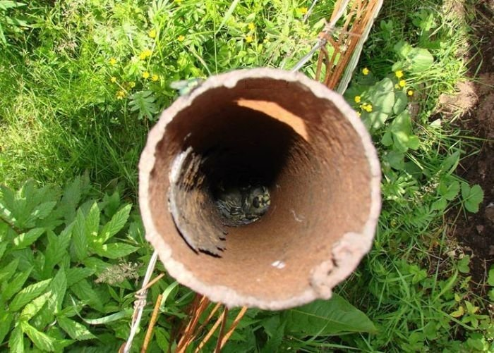 Угадайте, что внутри трубы? (5 фото)