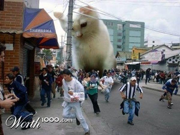Котэ атакует! (25 фото)