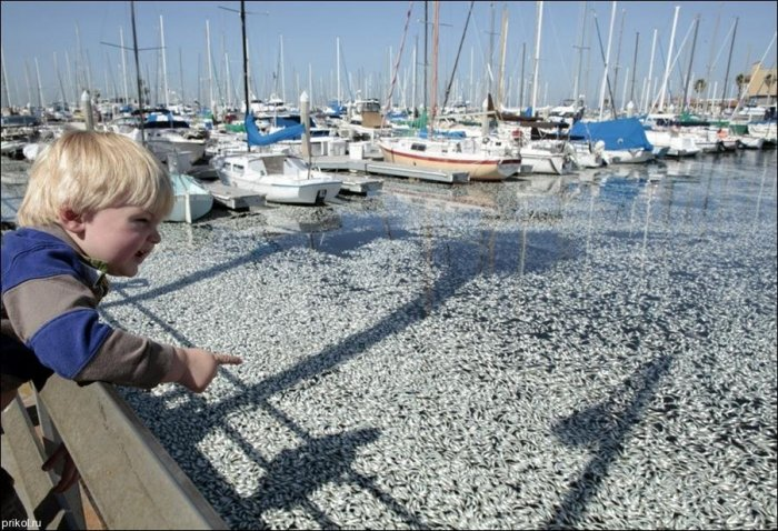 Рыбье покрывало (6 фото)