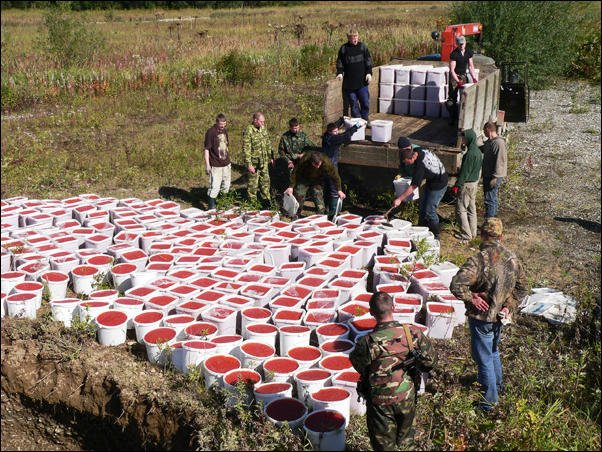 Уничтожение браконьерской икры (18 фото)