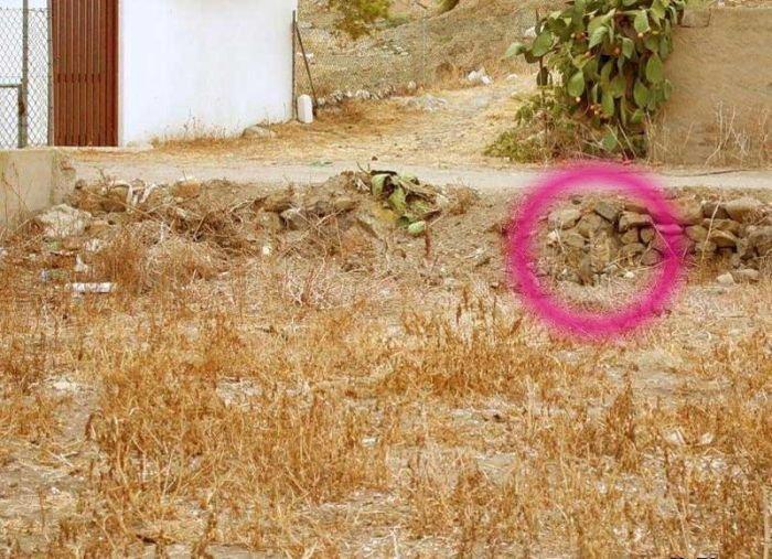 Найдите кота (5 фото)
