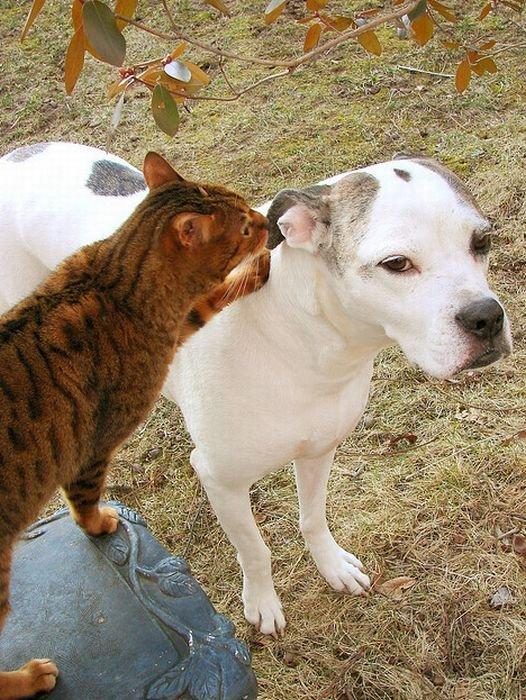Переговоры котов и собак (16 фото)