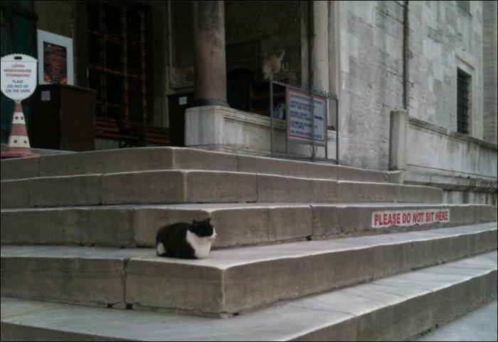 Коты отдыхают (50 фото)