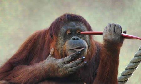 Удивительные случаи с животными (10 фото + текст)