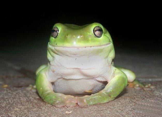 Рацион древесной лягушки (8 фото)
