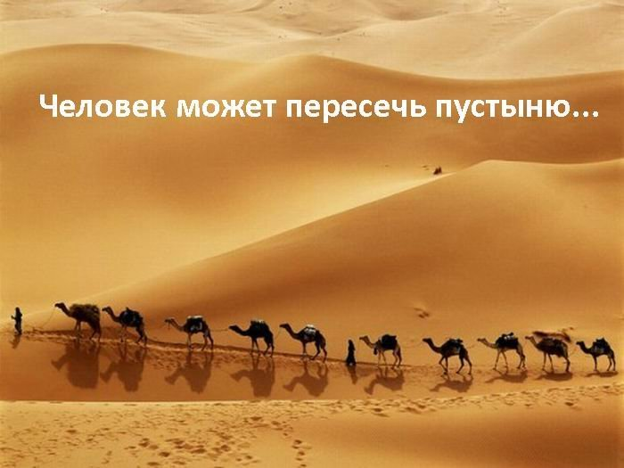 Парадокс человечества (7 фото)