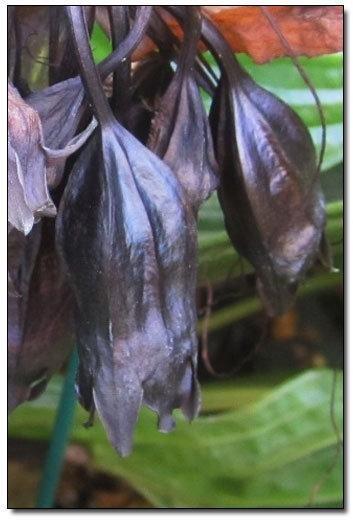 Самые необычные растения в мире (11 фото + текст)