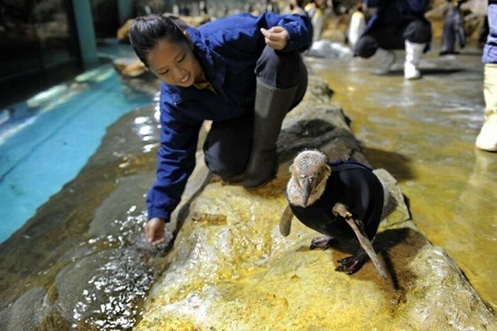 Костюм для пингвина (8 фото)