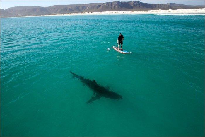 Вдвоем с акулой (2 фото)