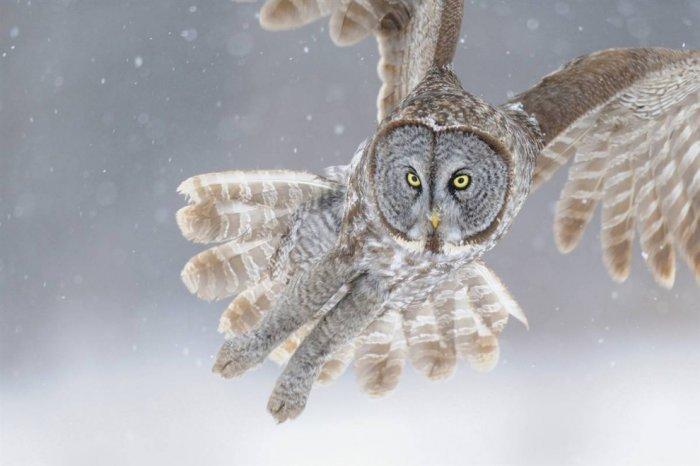 Стоп-кадры с животными (20 фото)