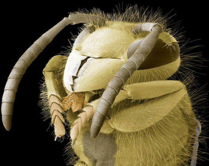 Макрофотографии насекомых (12 фото)