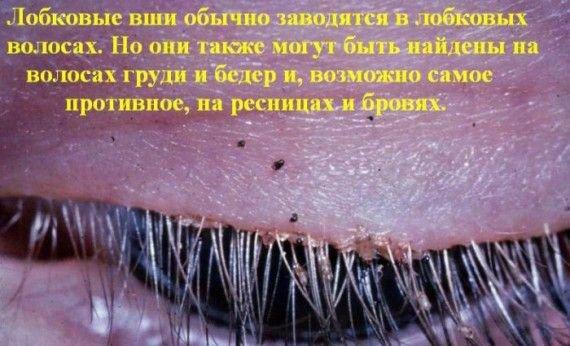 Интересные факты (12 фото)