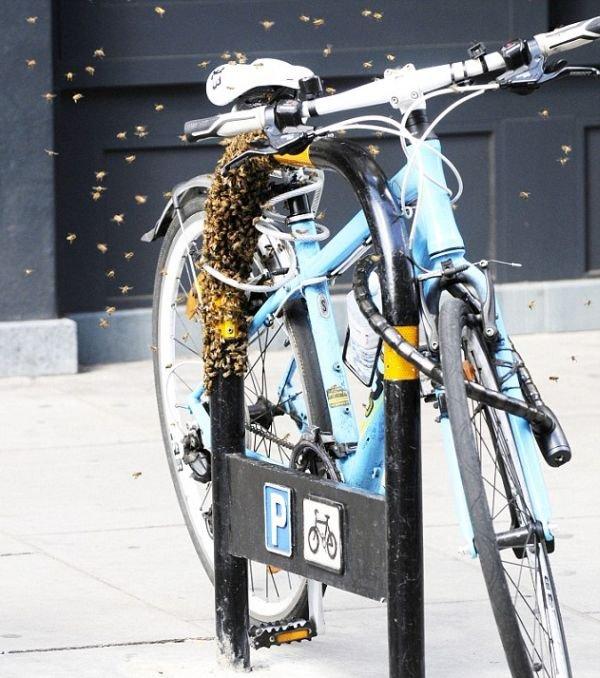 Лучшая противоугонная система для велосипеда (6 фото)