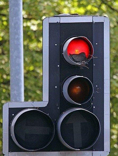 Что не так с этим светофором? (4 фото)