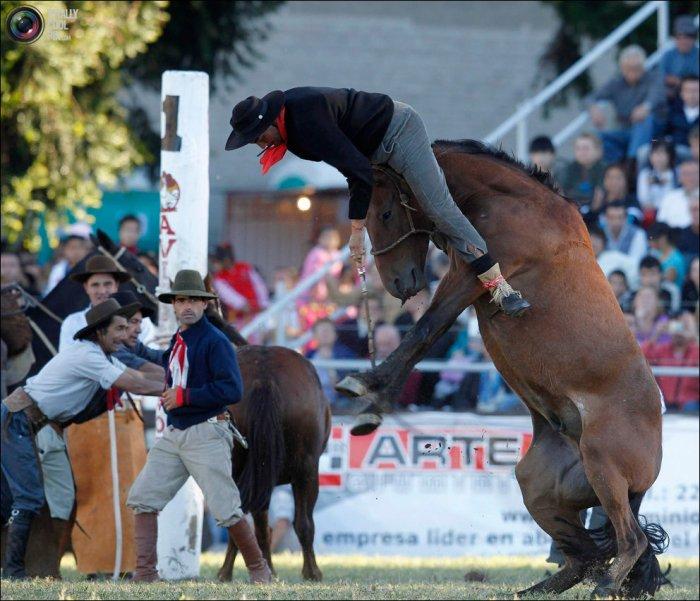 Экстремальное катание на лошадях (21 фото)