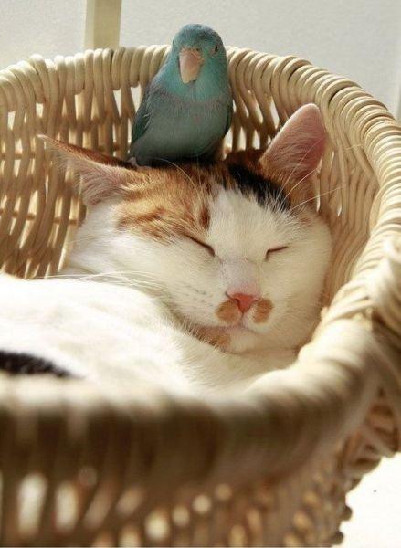 Кот и попугай (4 фото)